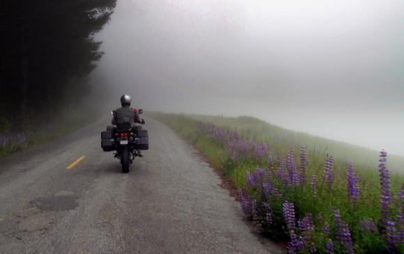 Foggy morning ride with the lupines.