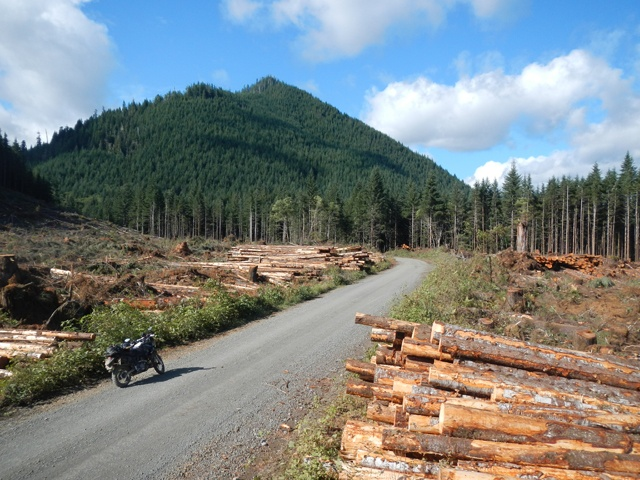 AltRider's Hoh Rainforest Ride 2015 - Action Shot